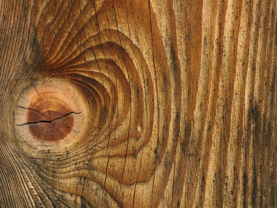 Knot in wood