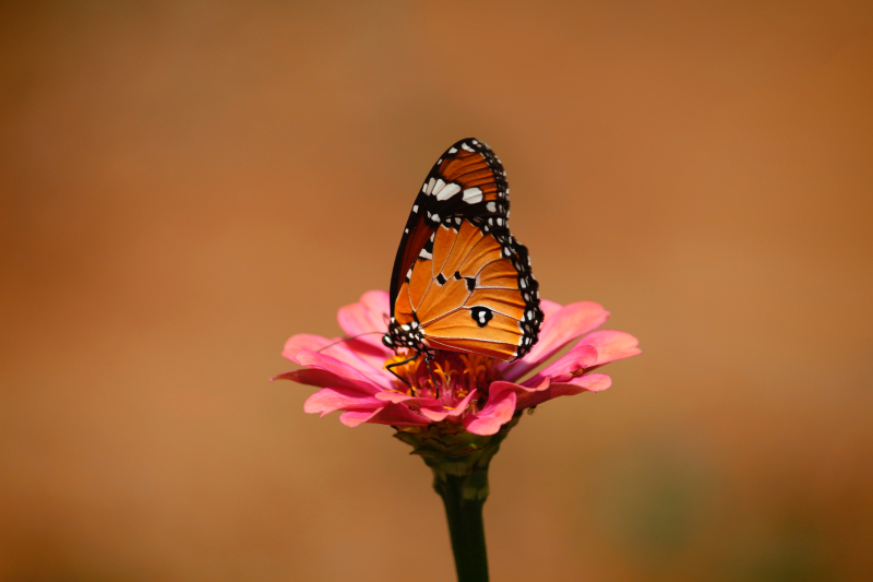 Nandhu-kumar-butterfly